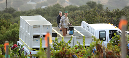 Arnot-Roberts & the Future of California | Verve Wine
