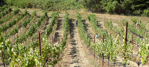 Arnot-Roberts Vineyard | Verve Wine