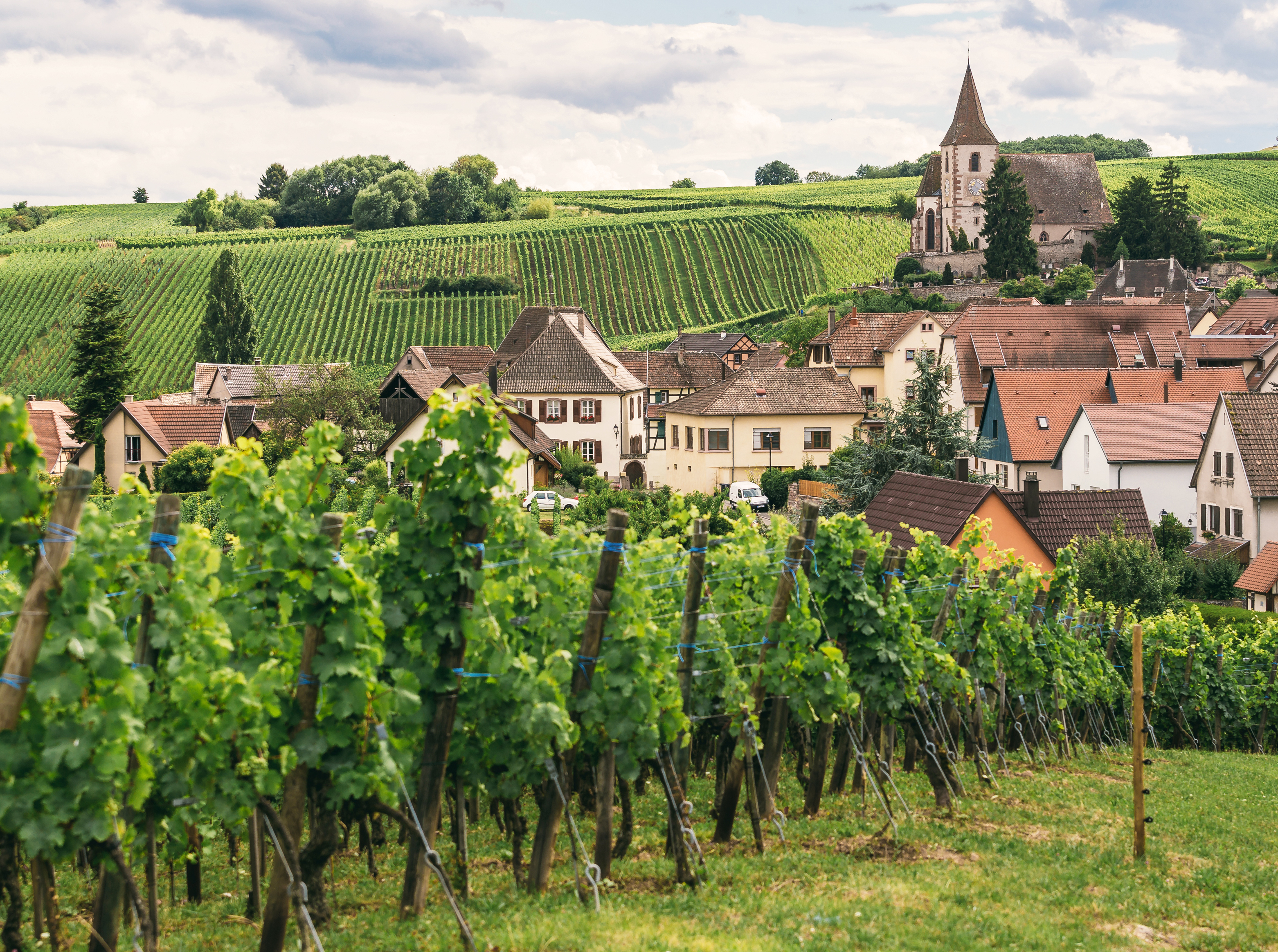 Six of Our Favorite Burgundian Producers with an Unbelievable Quality to Price Ratio - Verve Wine