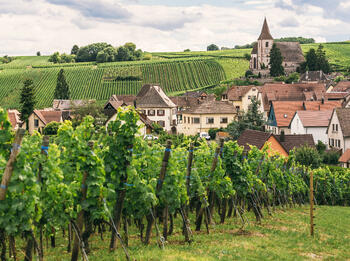 Six of Our Favorite Burgundian Producers with an Unbelievable Quality to Price Ratio