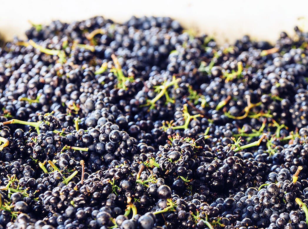 What Is Carbonic Maceration and Why Do We Love It So Much? - Verve Wine