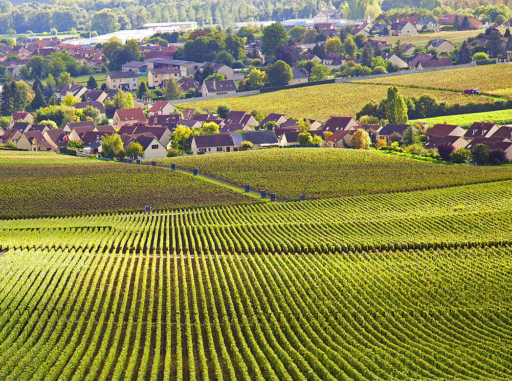 5 Chablis Producers You Need to Know