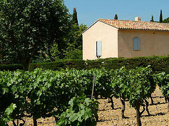 Producers We Love: Domaine Tempier