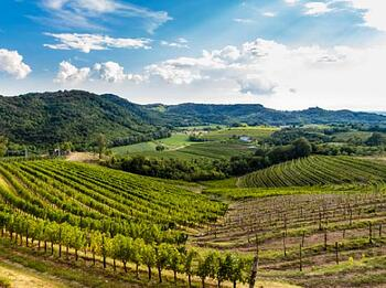 Everything You Need to Know About Friuli