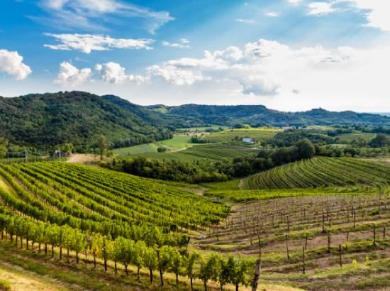Friuli_Thumbnail-1