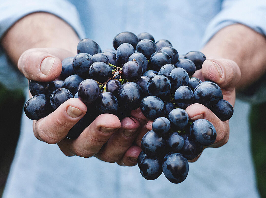 What Organic, Biodynamic, Sustainable, and Natural Wine Actually Mean | Verve Wine