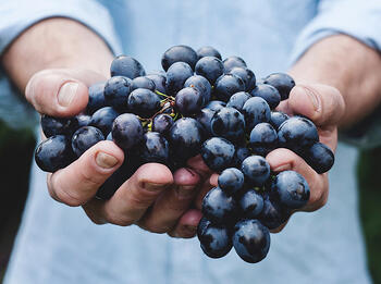 What Organic, Biodynamic, Sustainable, and Natural Wine Actually Mean