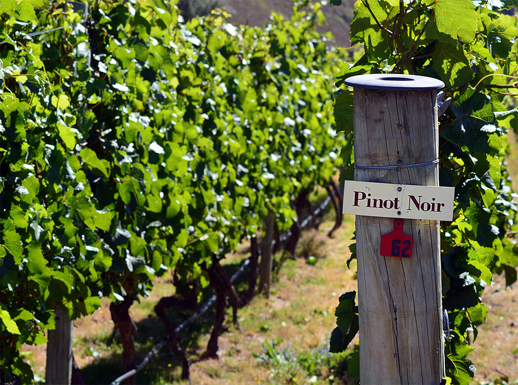 Pinot Around the Globe, Explained - Verve Wine