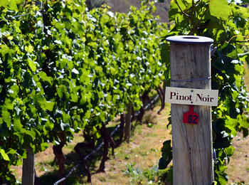 Pinot Around the Globe, Explained