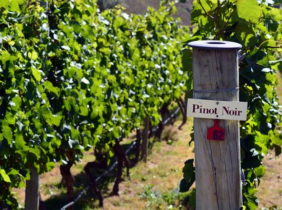 Pinot Around the Globe, Explained