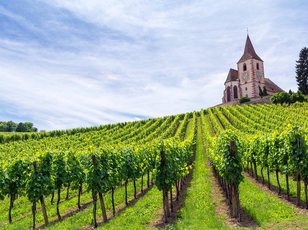 Provence Blog - Verve Wine