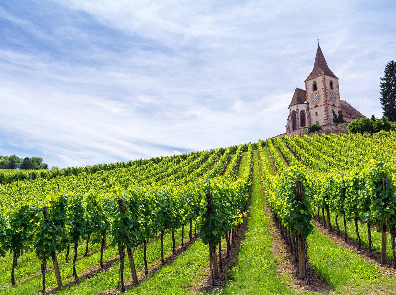 5 Provençal Producers We're Digging This Summer