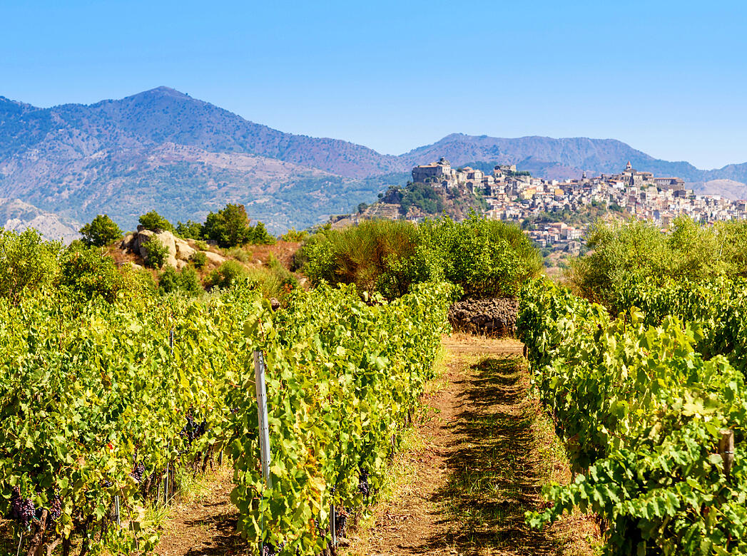 Everything You Need to Know About Sicily | Verve Wine
