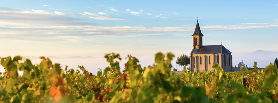 Beaujolais, French Wine Regions and Producers | Verve Wine