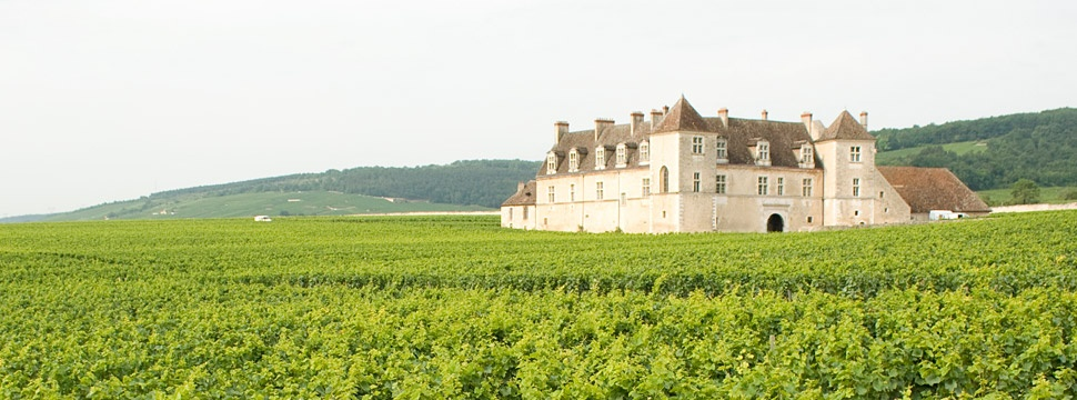 Burgundy, French Wine Regions and Producers | Verve Wine
