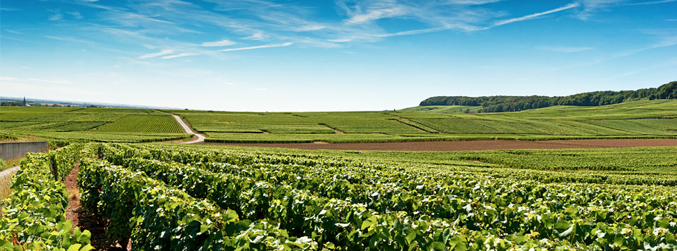 Champagne, French Wine Regions and Producers | Verve Wine
