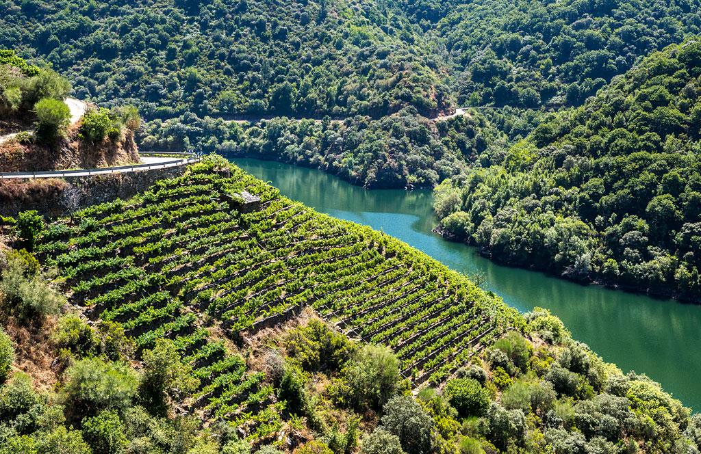 Five of Our Favorite Galician Producers | Verve Wine