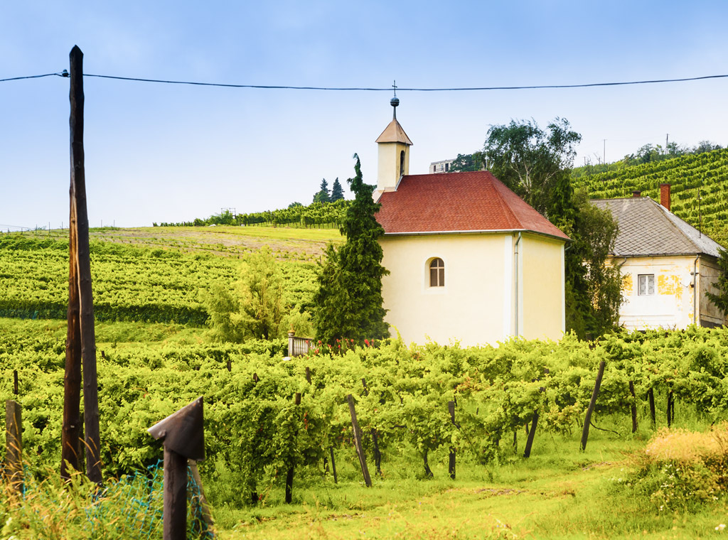 Discover Hungary, Central Europe's Hotbed Rich Dessert Wines & 'Bull's Blood' I Verve Wine