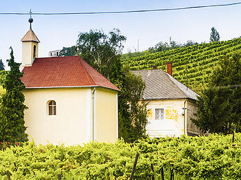 Discover Hungary, Central Europe's Hotbed Rich Dessert Wines & 'Bull's Blood'