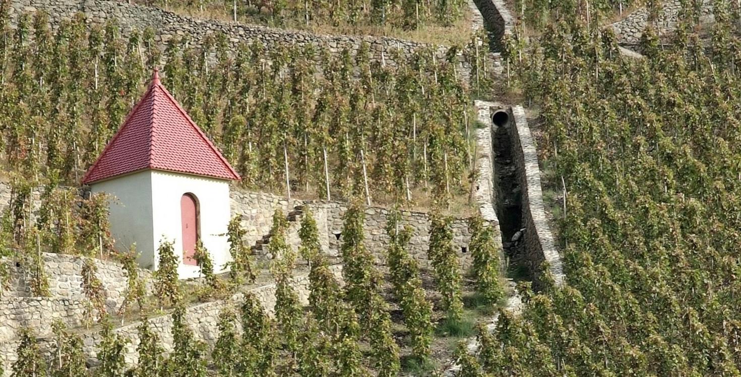 Northern Rhone Wines   Verve Wine