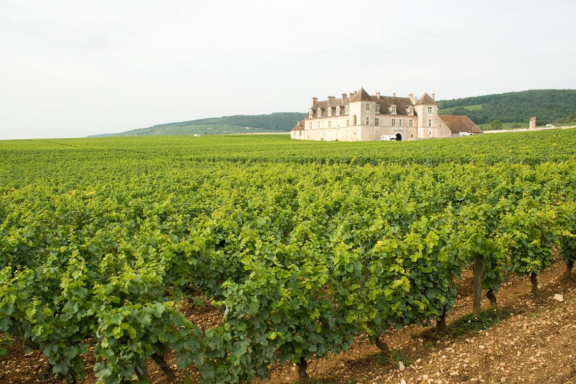 A Guide To Our Favorite Burgundy Producers | Verve Wine