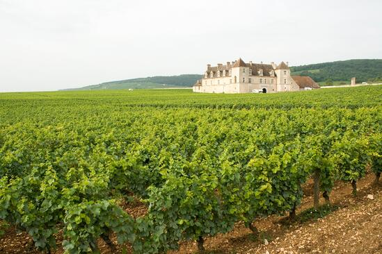 Map of Burgundy, France | Verve Wine