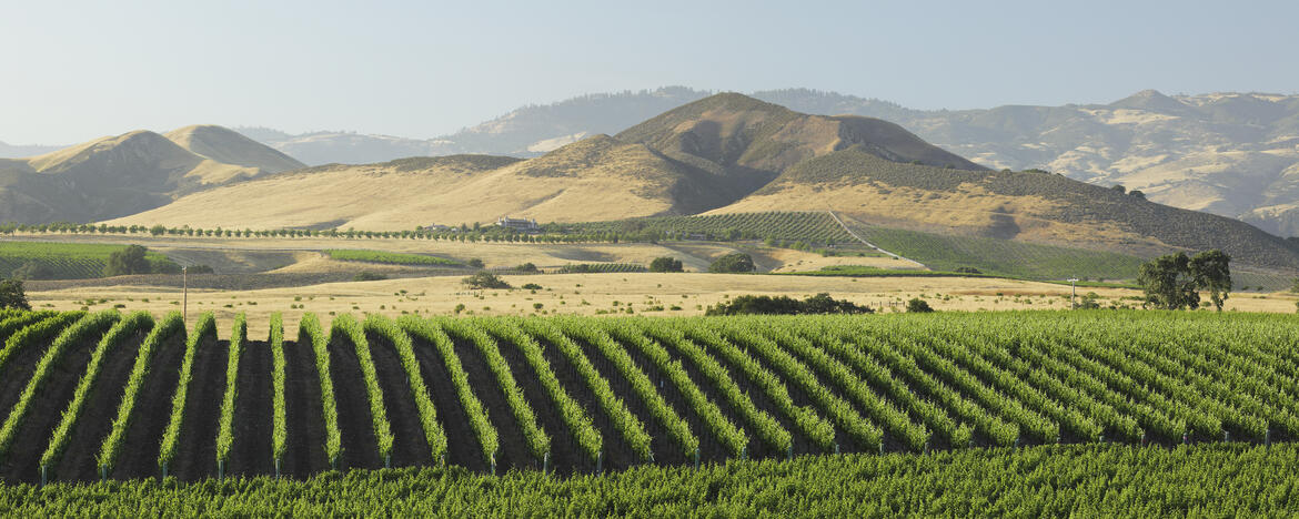 A Guide to Our Favorite California Producers | Verve Wine