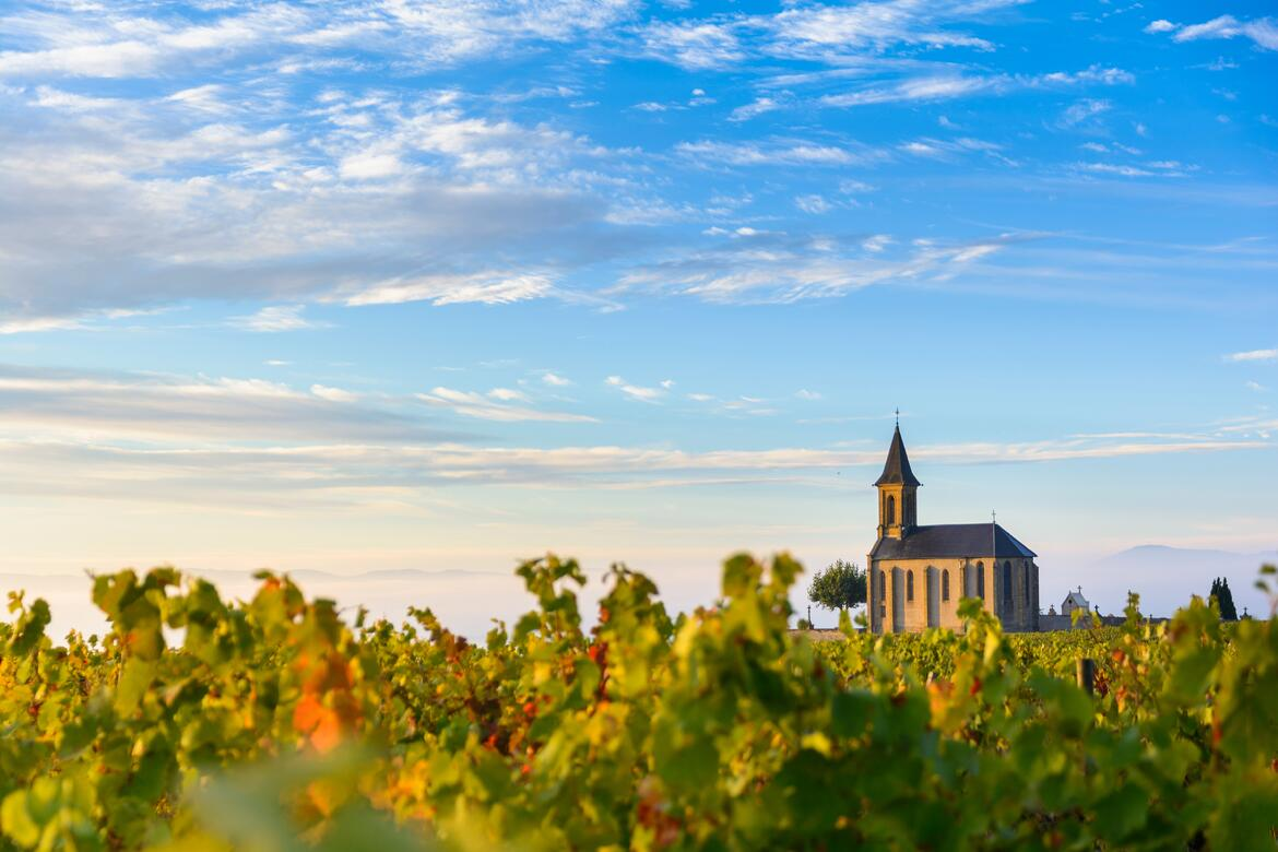 A Guide to Our Favorite Beaujolais Producers | Verve Wine