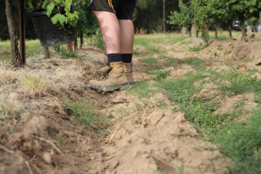 sandy soil in vineyard