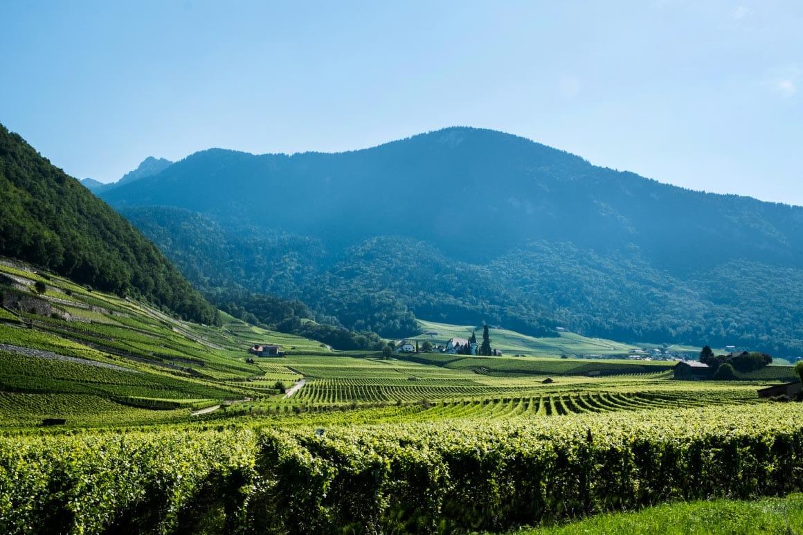 piedmont nebbiolo | Verve Wine