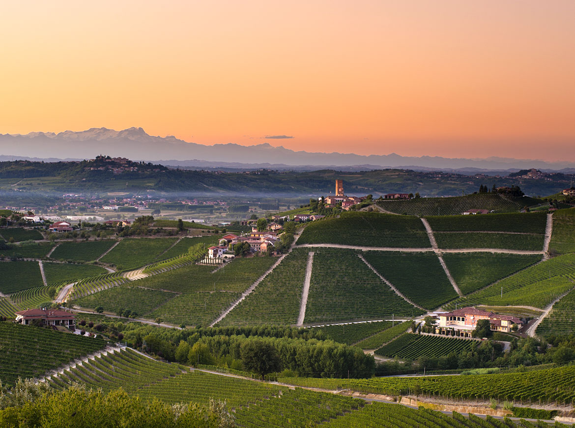 Get to Know Piedmont, Home to World Class Nebbiolo | Verve Wine