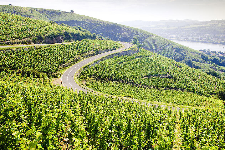 Discover France's Rhône Valley - North vs. South   Verve Wine