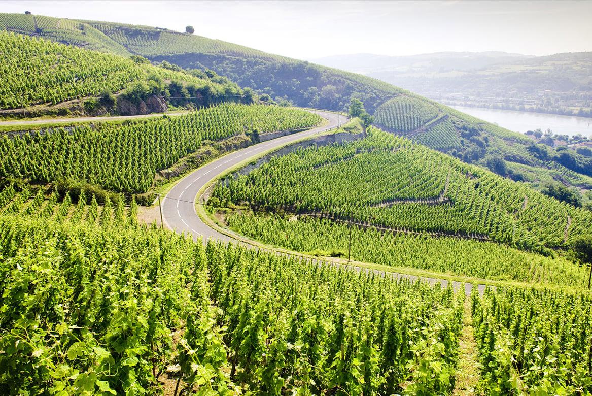 Discover France's Rhône Valley - North vs. South | Verve Wine