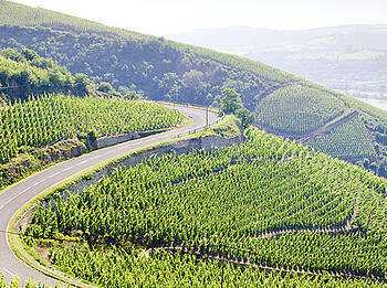 Discover France's Rhône Valley - North vs. South