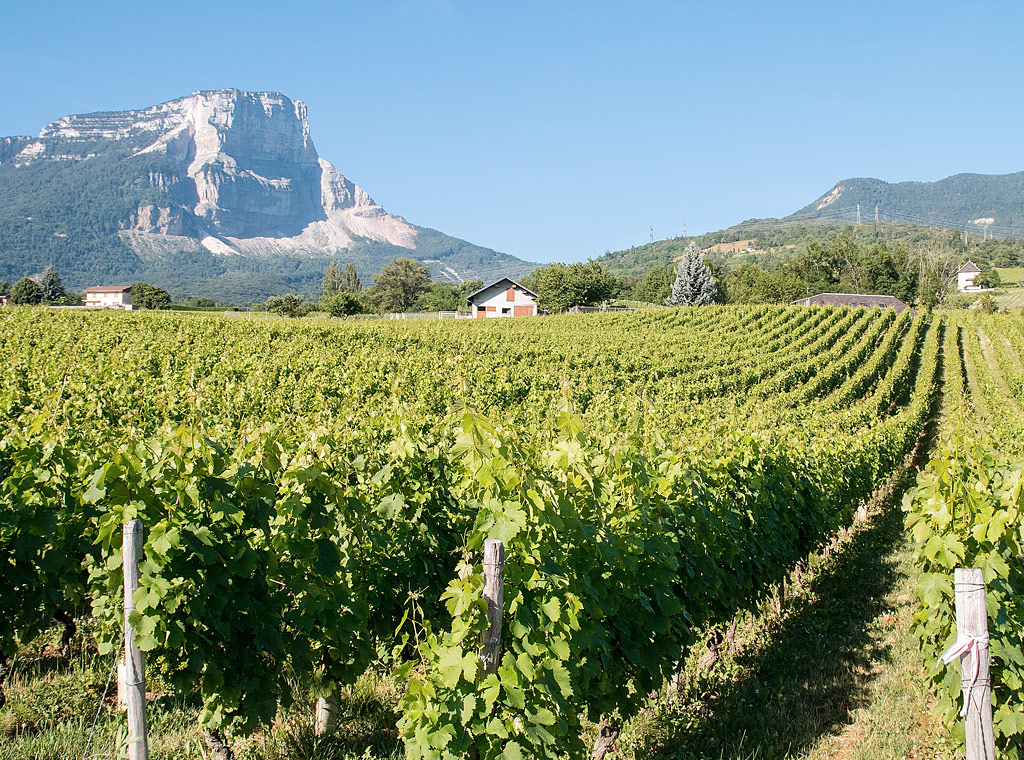Discover Savoie, France's Alpine Influenced Wine Region | Verve Wine