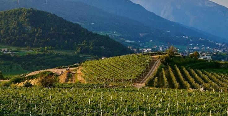 Northern Rhone Syrah   Verve Wine