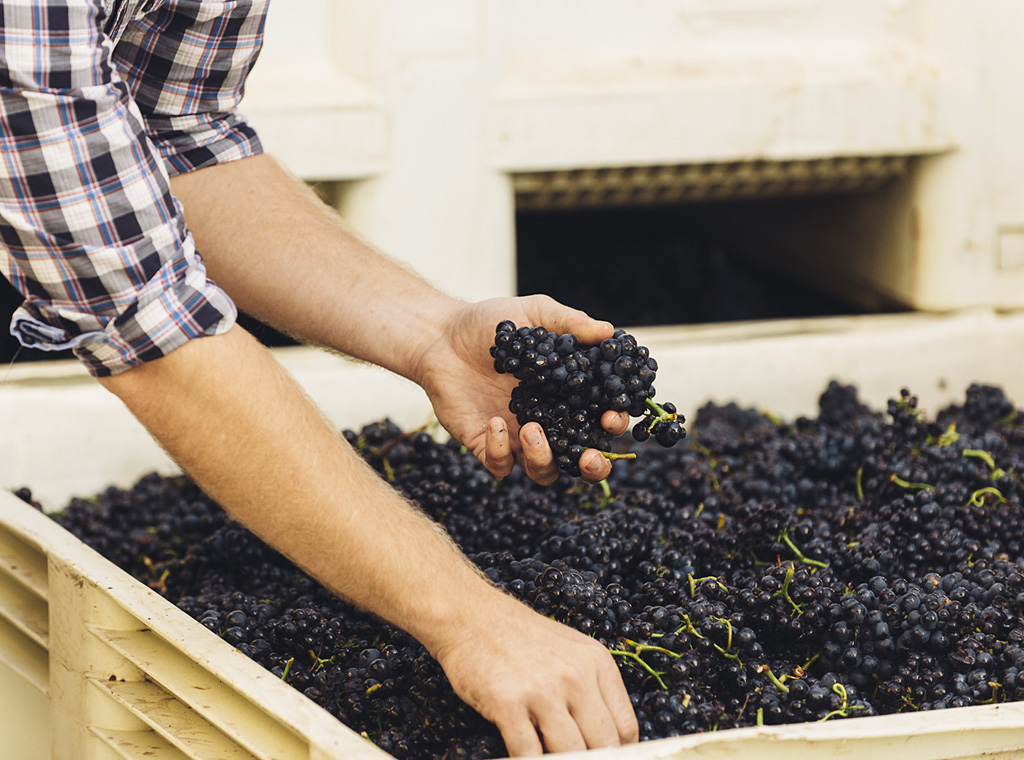 Are You a Vinification Expert? Test Your Knowledge Here | Verve Wine