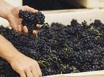 Are You a Vinification Expert? Test Your Knowledge Here